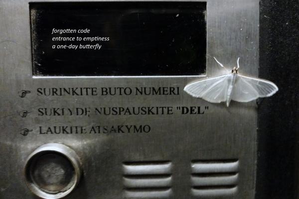 dainius-dirgela-forgotten-code2DA004F7-E5BA-1A3C-85CC-B00B4E06498E.jpg